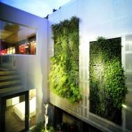 Вертикальные зеленые сады во внутреннем дворике