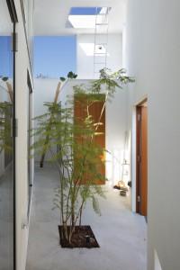 Деревья высаженные в кадки внутри городского дома